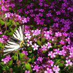 Il Sentiero delle farfalle di Valdieri (Valle Gesso)