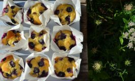 Blueberry muffins Joy of Cooking